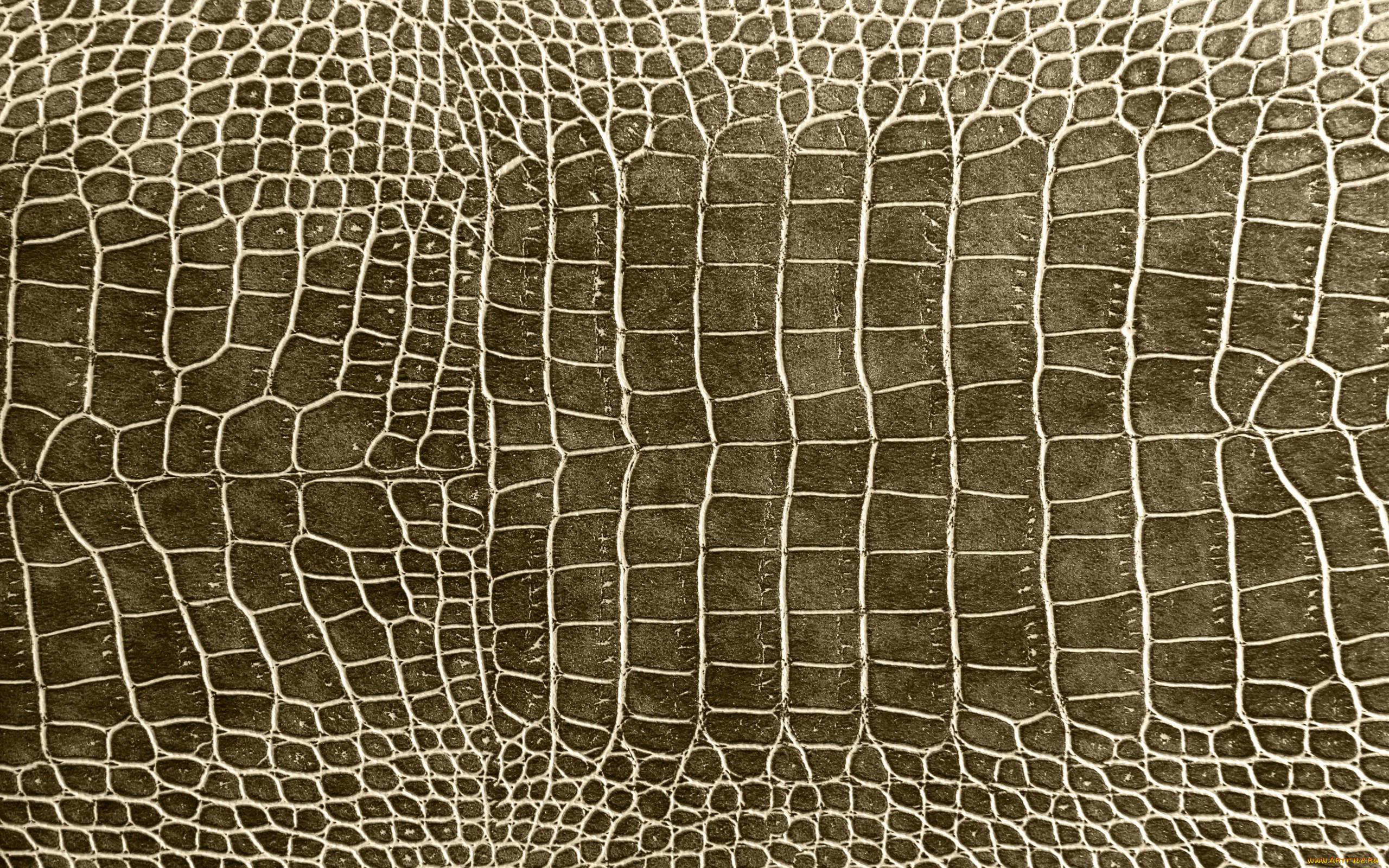 рисунок кожи крокодила одном видно